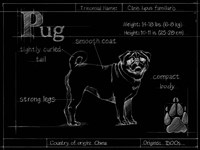 Blueprint Pug Fine-Art Print