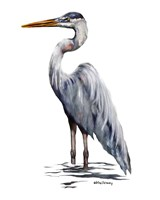 Blue Heron with White Back Fine-Art Print