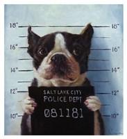Mug Shot Fine-Art Print