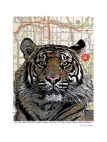 Kansas City Tiger Fine-Art Print