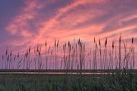 Marsh Reeds Fine-Art Print