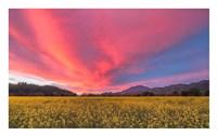 Spring Sunset Napa Valley Fine-Art Print