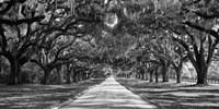 Tree Lined Plantation Entrance,  South Carolina Fine-Art Print