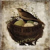 Nest & Eggs Fine-Art Print
