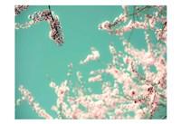 Apple Sky Fine-Art Print