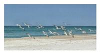 Beach Skimmers Fine-Art Print