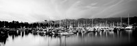 Boats moored in harbor at sunset, Santa Barbara Harbor, California Fine-Art Print