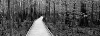 Boardwalk passing through a forest, Congaree National Park, South Carolina Fine-Art Print