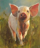 Morning Pig Fine-Art Print
