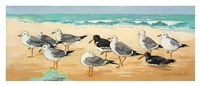Seagulls and Sand Fine-Art Print