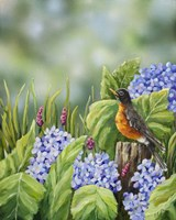 Robin With Hydrangeas Fine-Art Print