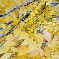 Golden Leaves Fine-Art Print