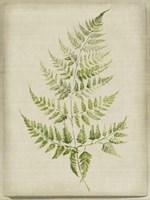 Fern 2 Fine-Art Print
