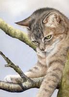 Tabby In Tree Fine-Art Print