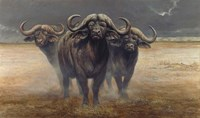 Cape Buffalos Fine-Art Print