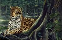 Jaguar By The River Fine-Art Print