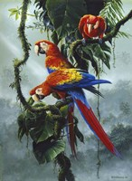 Red And Yellow Macaws Fine-Art Print