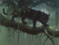 Black Jaguar Fine-Art Print