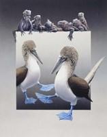 Bluefooted Boobies And Marine Iguanas Fine-Art Print