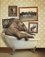 Elephant In Tub Fine-Art Print
