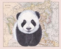 Asian Panda Fine-Art Print