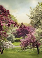 Cherry Tree Grove Fine-Art Print