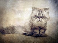 Cranky Cat Fine-Art Print