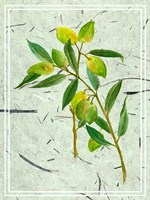 Olives on Textured Paper I Fine-Art Print