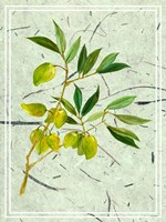 Olives on Textured Paper II Fine-Art Print