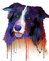 Border Collie 1 Fine-Art Print