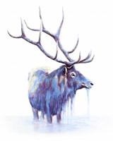 Elk in Water Fine-Art Print