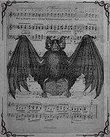 Vintage Bats 2 Fine-Art Print