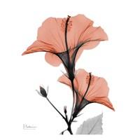 Soft Hibiscus Fine-Art Print