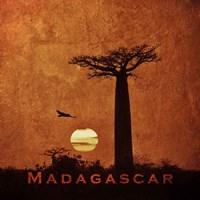 Vintage Baobab Trees at Sunset in Madagascar, Africa Fine-Art Print