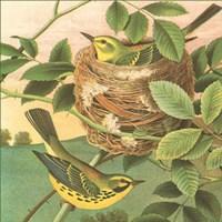 Goldfinch & Warbler B Fine-Art Print