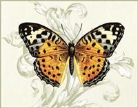 Butterfly Theme IV Fine-Art Print