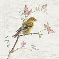 Female Goldfinch Vintage Fine-Art Print