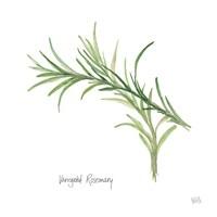 Variegated Rosemary Fine-Art Print