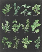 Herb Chart on Black Fine-Art Print