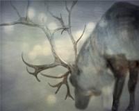 If On A Winters Night Fine-Art Print