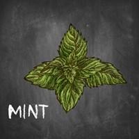 Mint on Chalkboard Fine-Art Print