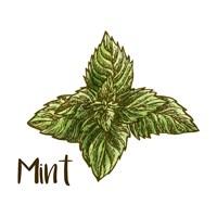 Mint Fine-Art Print