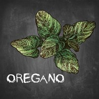 Oregano on Chalkboard Fine-Art Print