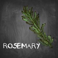 Rosemary on Chalkboard Fine-Art Print