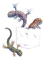 Three Lizards Fine-Art Print