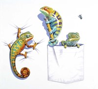 Three Chameleons Fine-Art Print