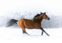 Pop of Color Running Horse Fine-Art Print