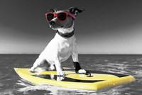 Pop of Color Surf's Up Dog Fine-Art Print