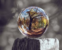 Pop of Color Glass Sphere Fine-Art Print