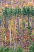White Mountains in Fall, New Hampshire Fine-Art Print